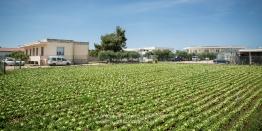 """Il """"CRSFA- Centro di Ricerca e Sperimentazione e Formazione in Agricoltura """"""""Basile Caramia""""""""a Locorotondo (BA)"""