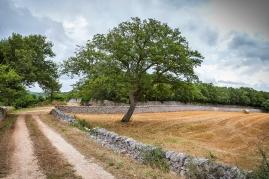 Territorio di Cisternino (BR)