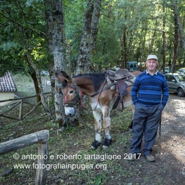 Lagonegro (PZ) Contrada La Brusca, a circa 1.000 metri di altezza, il mulo che trasporterà il Parroco fino al Santurario.