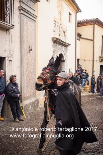 Pignola (PZ), 17 gennaio 2018, festa di Sant'Antonio Abate, la preparazione degli animali prima della corsa rituale