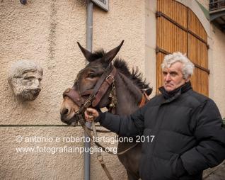 Pignola (PZ), 17 gennaio 2018, festa di Sant'Antonio Abate, animali in piazza dopo la corsa rituale che consiste in tre giri nel centro antico, partendo dalla Chiesa di Sant'Antonio Abate. Ci sono tre categorie distinte: asini, muli, cavalli.