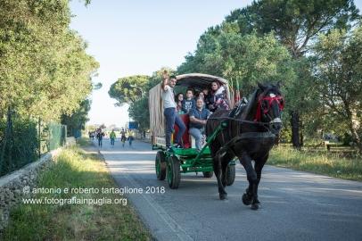 """Il pellegrinaggio dei """"traini"""" da Francavilla Fontana ad Oria la mattina della domenica."""