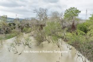 Il fiume Bradano nei pressi della SP 8