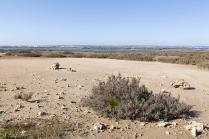 Taranto (TA); Oasi palude La Vela, sita nel secondo seno del mar Piccolo di Taranto, da molti anni oasi WWF.