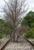 Taranto (TA); lungo l'antica ferrovia dismessa che collegava la Stazione Nasisi con l'Arsenale militare di Taranto, sito nel centro cittadino.